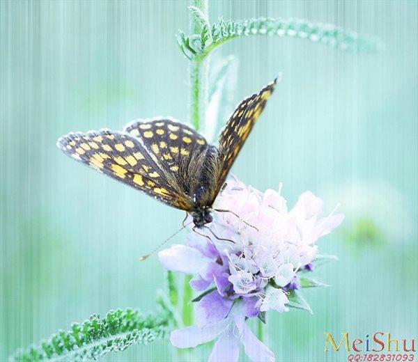【打印级】ZSH42391043动物昆虫装饰画图片 花朵蝴蝶-18M-2750X2387