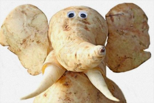 蔬菜们变可爱动物了