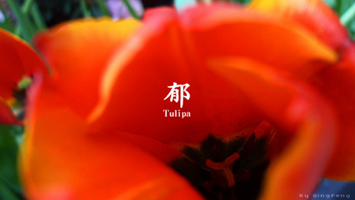 郁(拍摄日期:2012年2月8日)