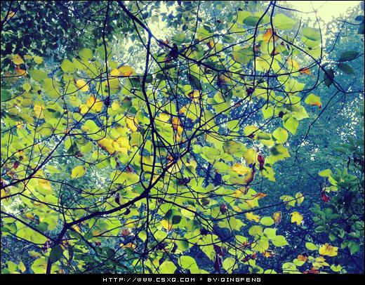 流年碎影(拍摄日期:2003年11月4日)