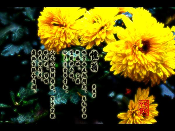 红楼梦·菊花诗·佛光(拍摄日期:2003年11月12-14日)