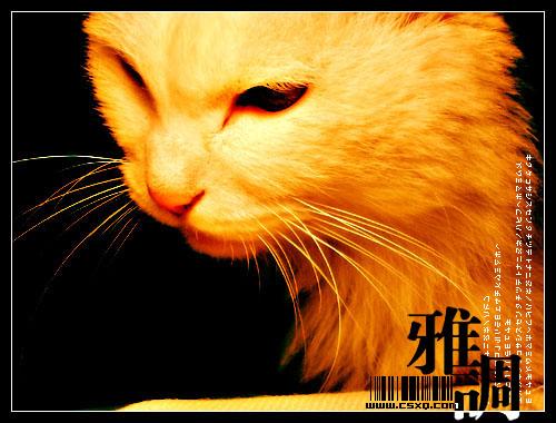 雅调(拍摄日期:2004年12月11日-12日)