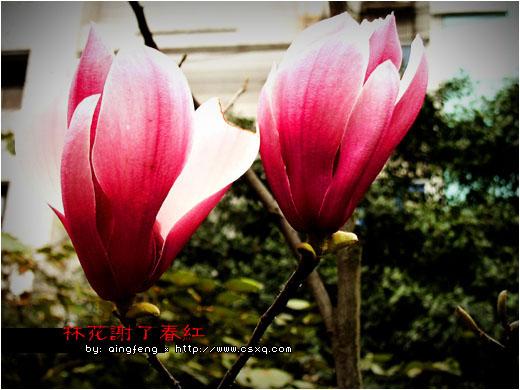 林花谢了春红(拍摄日期:2005年3月2日-4日)