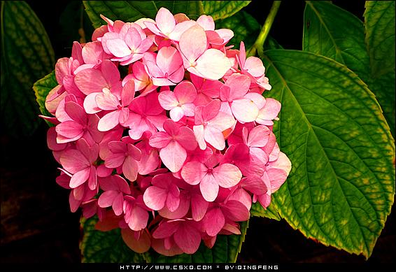 玉玲珑(拍摄日期:2009年6月25日-27日)