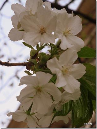 盛开的花朵|艳阳天——悠闲的川大望江校区