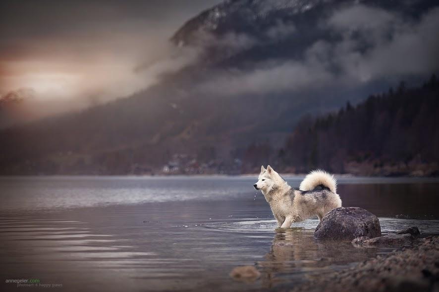 Much Landscape, A Little Bit of a Dog by Anne Geier