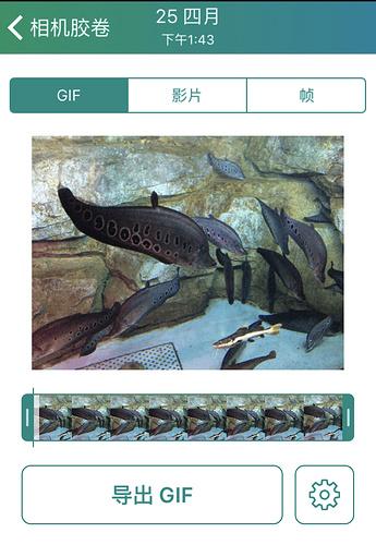 Lively:一款管理并转化 Live Photo 的 App