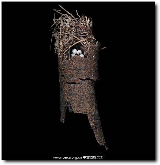 『女摄影师』Sharon Beals,鸟巢肖像