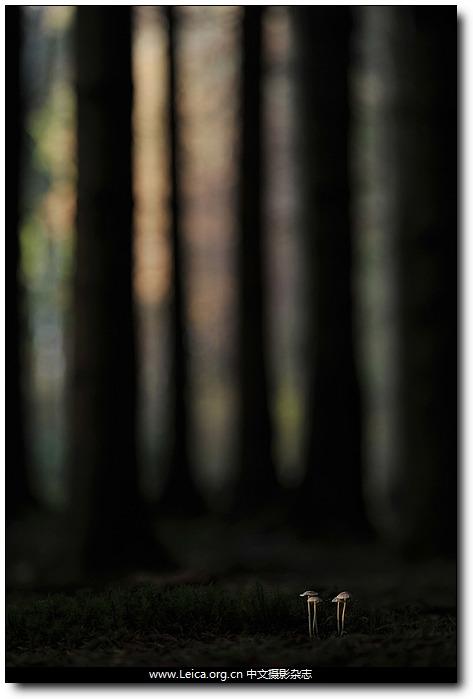 『摄影奖项』2012 全球年度园林摄影师奖获奖作品
