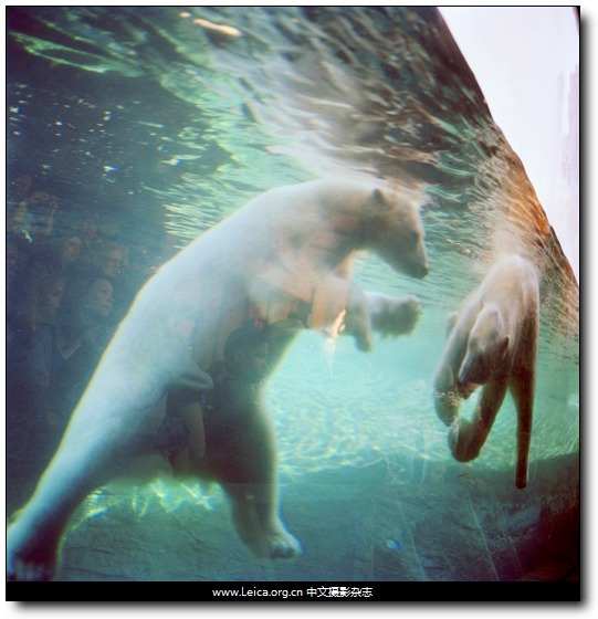 『女摄影师』Colleen Plumb,动物出没