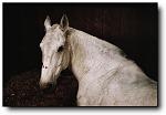 『他们在拍什么』Charlotte Dumas,马的肖像