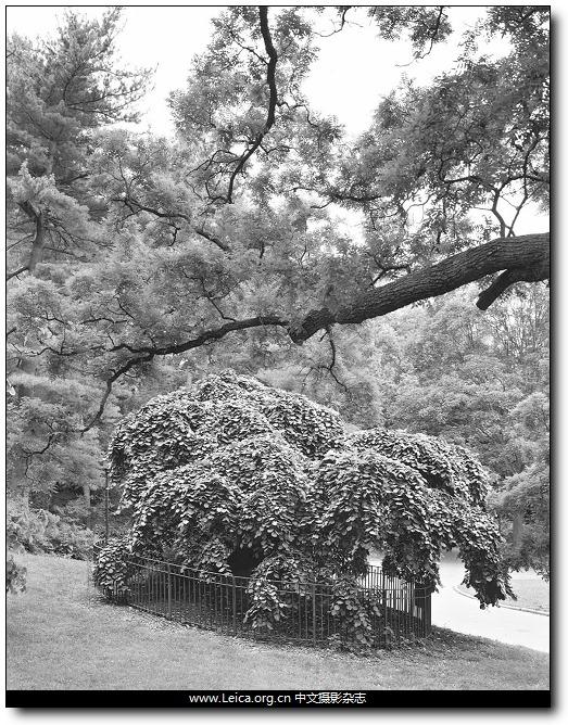 『他们在拍什么』Mitch Epstein,纽约的树