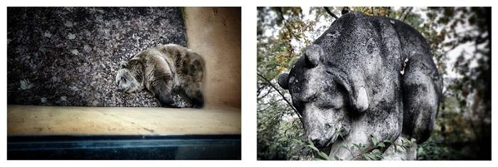 『女摄影师』Sara Munari,动物与雕塑