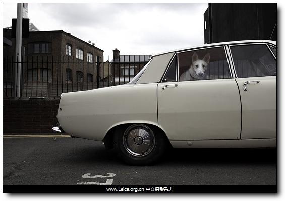 『他们在拍什么』Martin Usborne,汽车里的狗