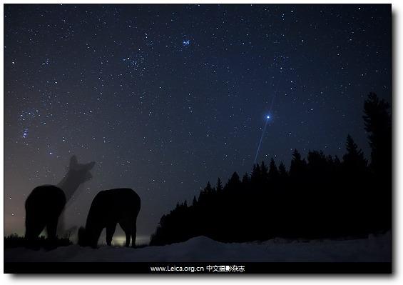 『摄影奖项』GDT 欧洲野生动物摄影师奖 2012