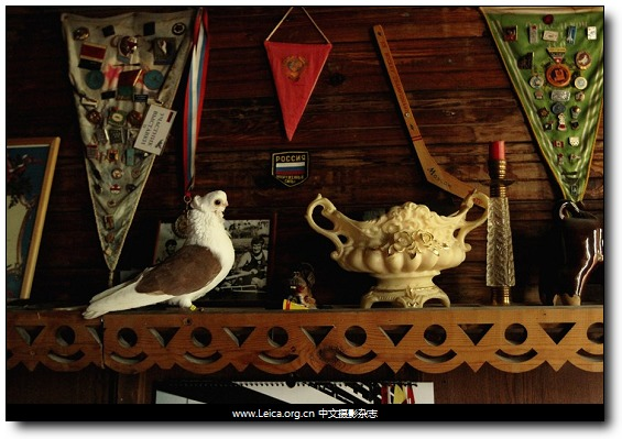 『女摄影师』Katerina Slesar,城市中的鸽子