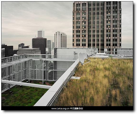 『他们在拍什么』Brad Temkin,绿色屋顶