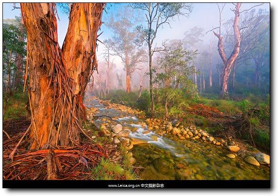 『摄影奖项』2015 年度园林摄影师奖作品