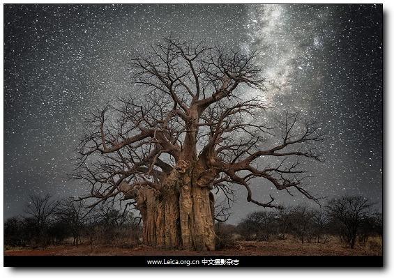 『女摄影师』Beth Moon,星空与树