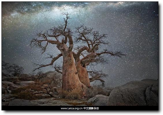 『女摄影师』Beth Moon,星空与树 - 『Leica中文摄影杂志』 - ...摄影改变生活...中文独立摄影阅读...