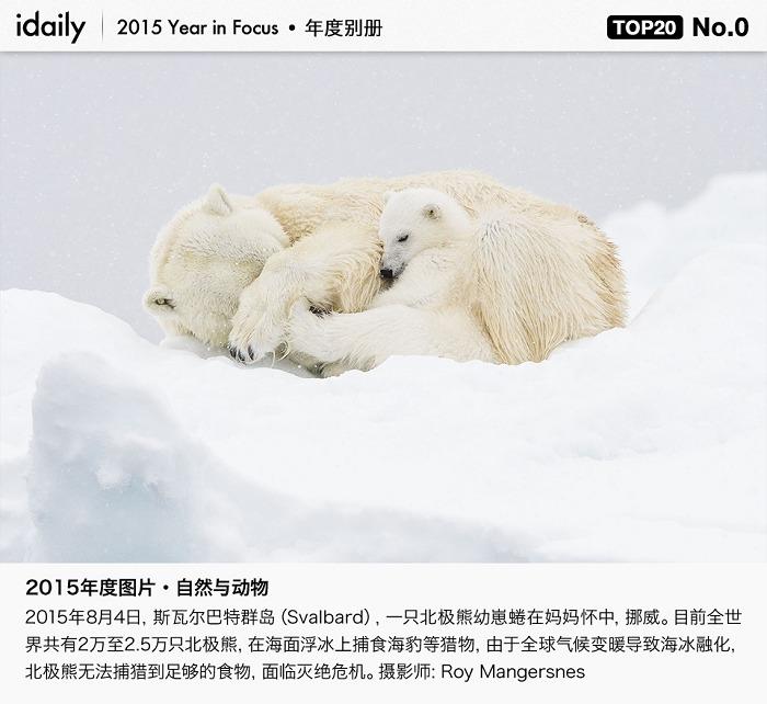 『最佳』idaily 年度新闻图片 Top20:自然与动物