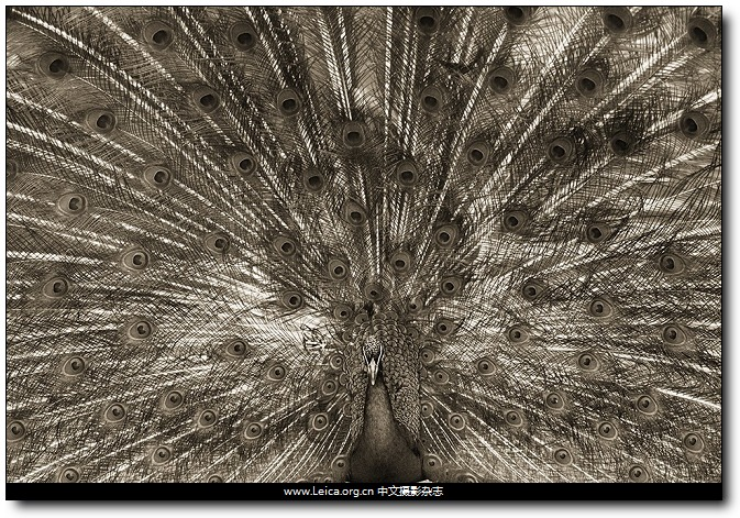 『他们在拍什么』Henry Horenstein:Animalia,动物肖像
