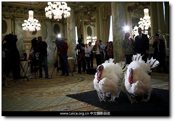 『iDaily』一周全球摄影图片精选:November 21 - 27, 2016