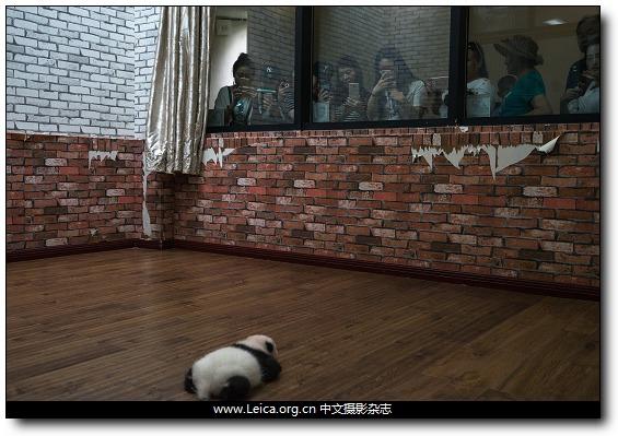『iDaily』一周全球摄影图片精选:July 03-09,2017