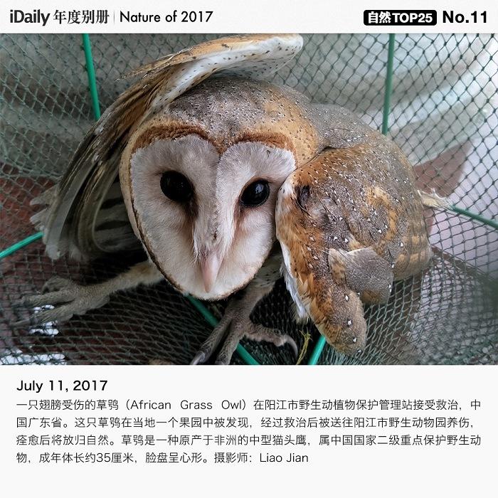 『iDaily』 2017 年度全球自然与动物图片 TOP 25