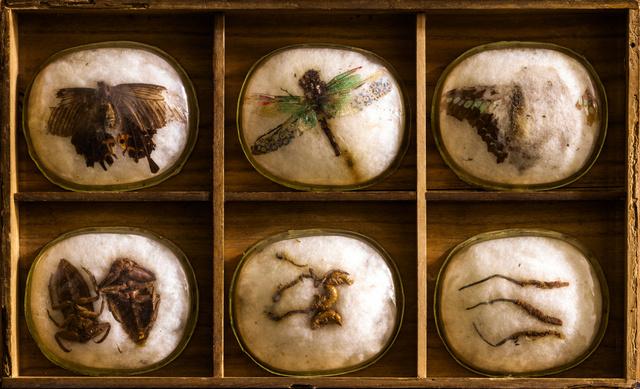 日本最古老昆虫标本最后一次公开展出 每日环球展览 iMuseum