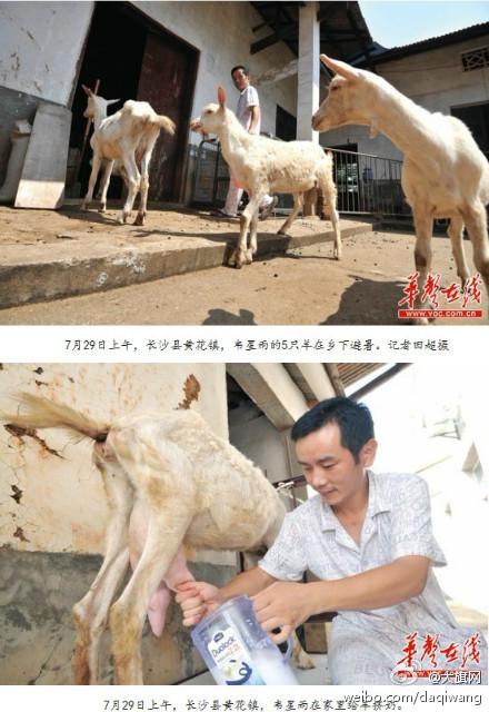图说今日 【20120730】 CCTV:小伙子一天手淫
