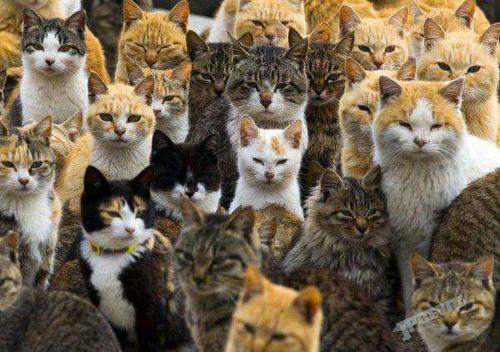 """要去的赶紧了,日本著名""""猫岛""""恐时日不多"""
