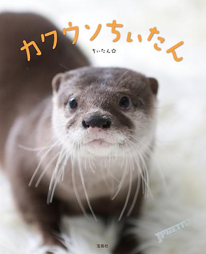 超绝可爱小猛兽,日本最红水獭宝宝出版照片集