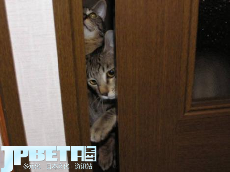 103004__468x_cats-in-crevices-006
