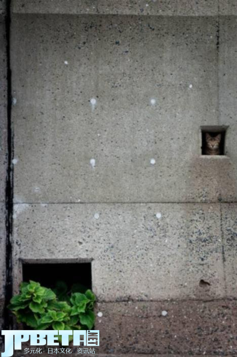 103040__468x_cats-in-crevices-042