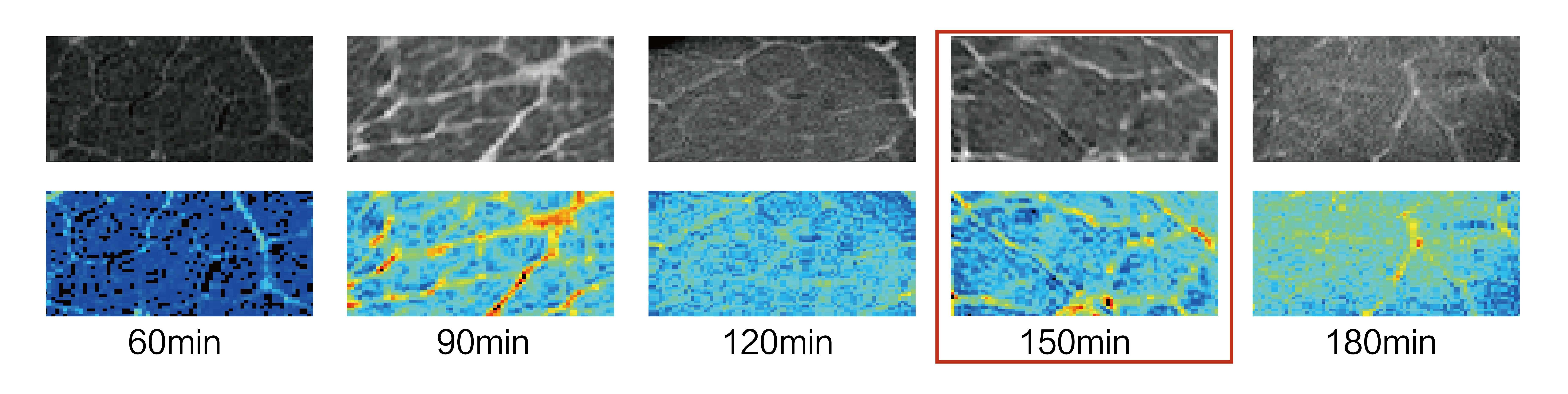 核磁共振法研究牛肉热加工过程品质变化