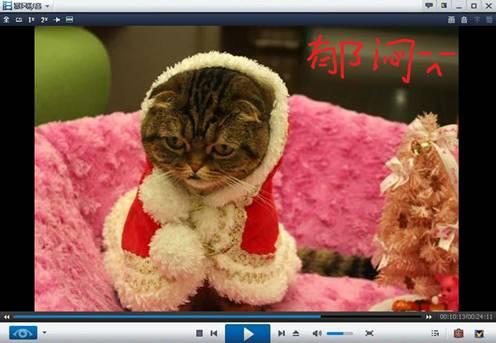 DV镜头前喵星人的新装圣诞秀