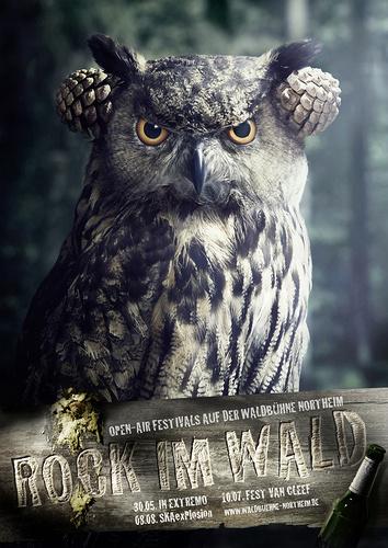 Annoyed-owl_1