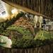 公益广告 保护热带雨林
