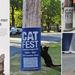 加拿大自然博物馆-猫咪节