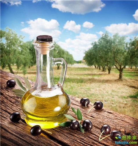 橄榄 橄榄枝 橄榄叶 橄榄油 橄榄油广告 橄榄油海报 JPG556