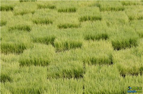草地 小草 绿草 草坪 草丛 草原 野草 杂草 草场 草原图片 草地素材 JPG1131