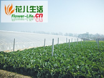 蔬菜大棚降低湿度是冬季防病的重中之重