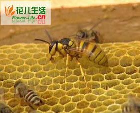 优选杀螨药物是蜂螨的无公害防治关键
