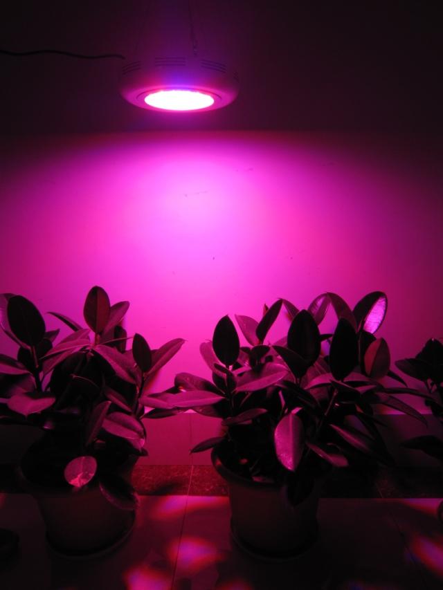90w led ufo grow rot blau orange pflanzenlampe lampe. Black Bedroom Furniture Sets. Home Design Ideas