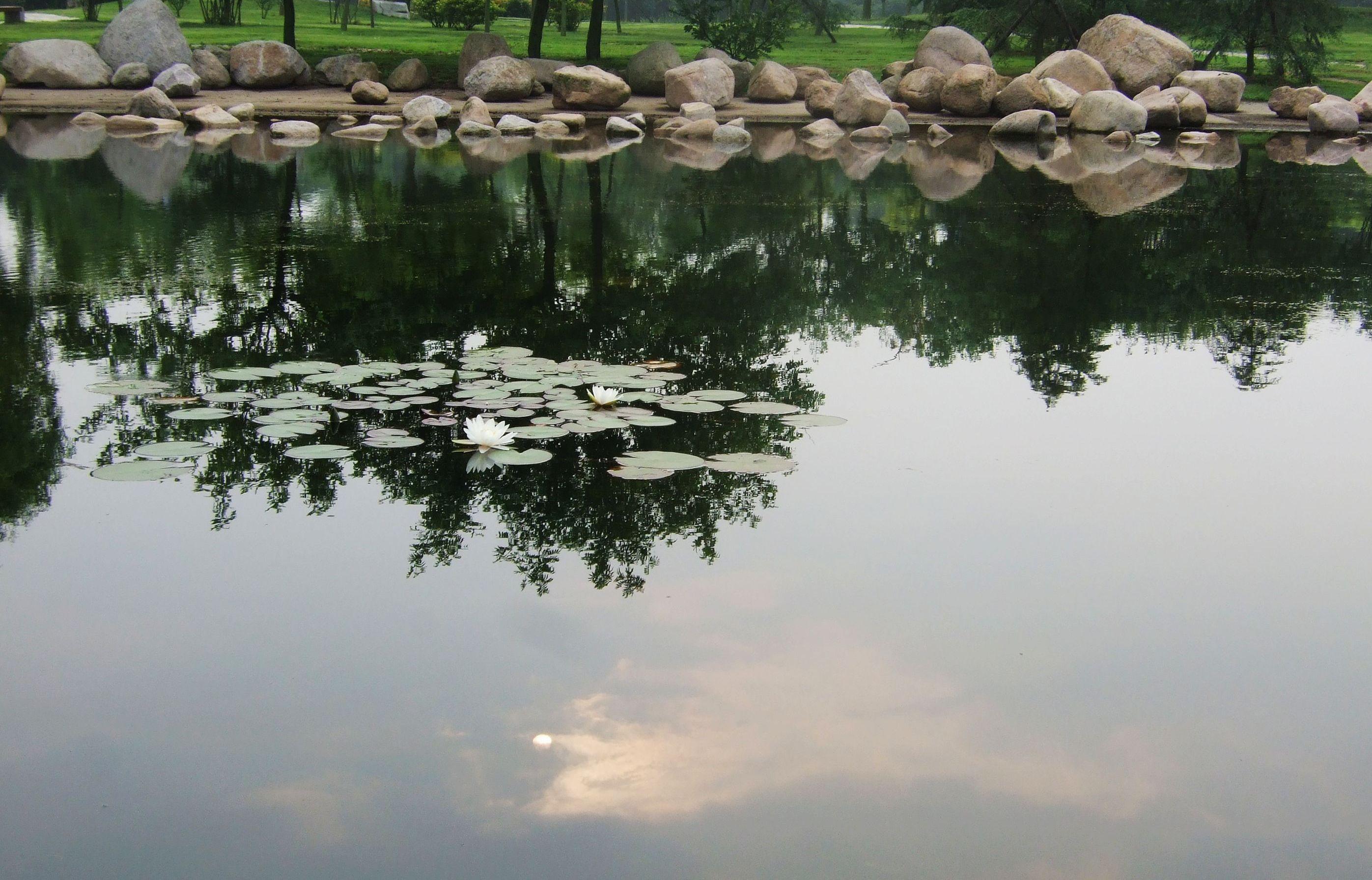 晨练摄影 - 杨兰 - dxyanglan 的博客