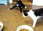 【搞笑】两只喵看病打了麻药回家后的销魂一幕!