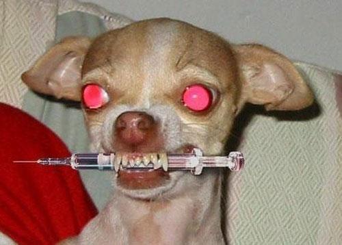 10种宠物正在秘密杀害你 (1)