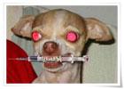 10种宠物正在秘密杀害你[10P]