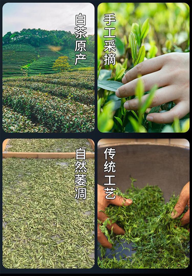2014老白菜_05.jpg